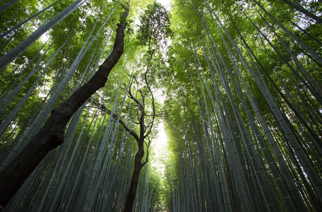 Greening the world, tree by tree, survey by survey