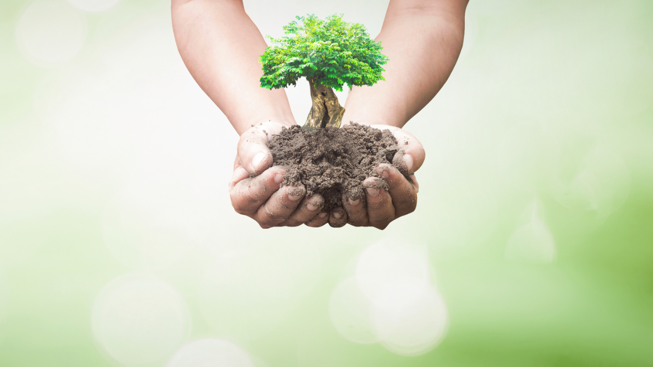 Integrating tree planting into research processes has even been so easy