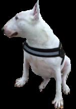 saskiasdog.png